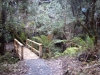 Bridge, ferns Loop trail, bush walk, Simmons Reef, Blackwood