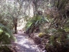 Fern walk, Loop trail, bush walk, Simmons Reef, Blackwood